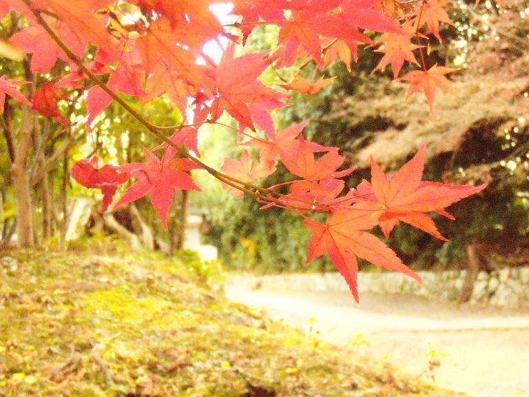 Kyoto2日目8