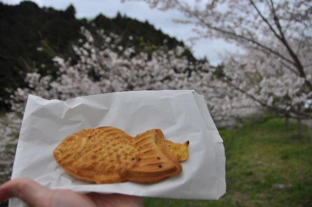 獅子ヶ鼻公園桜まつり07