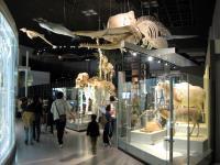 国立科学博物館④