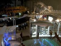 国立科学博物館⑤