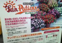 環境浄化植物