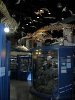 茨城県自然博物館②