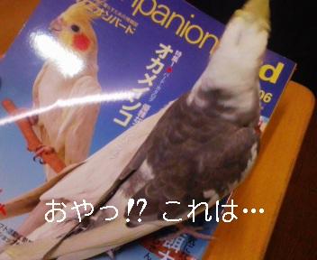 081025_195149_ed.jpg