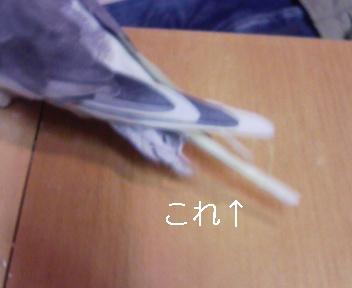 081220_195637_ed.jpg
