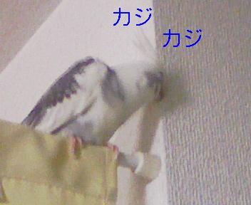 090303_185831_ed.jpg