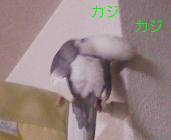 090303_185905_ed.jpg