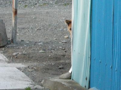 「番犬は見た!」