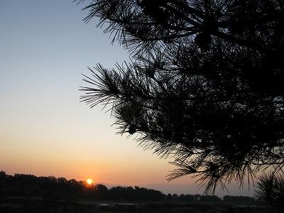 松の木・・・。