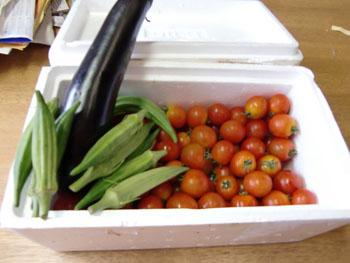 tomato-1