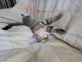 寝ています