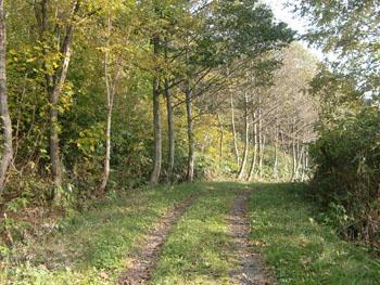 道民の森ー1