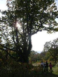 道民の森ー4
