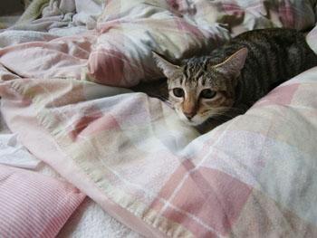 子猫ー戦闘モードへ