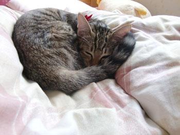 猫の昼寝-1