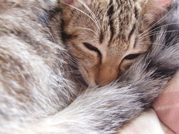 子猫の昼寝-2
