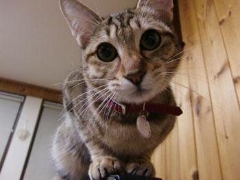 福猫アップーーー