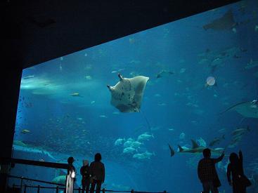美ら海水族館17