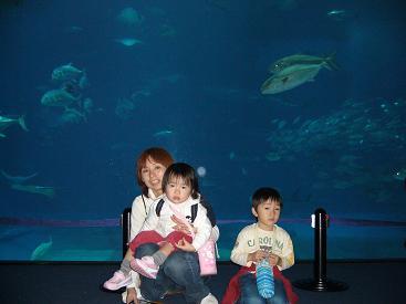 美ら海水族館19