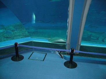 美ら海水族館21
