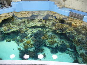 美ら海水族館27