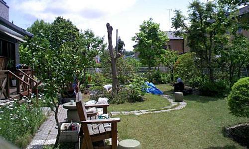 裏庭の池掃除 休んでる母と一生懸命働いている私ですヘ(^^ヘ)))。。。 手前のニョキッと立っている木は桂です 枝をほとんど詰めたのでちゃんと新しい枝が出るか心配です(-_-;)