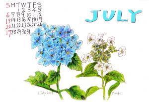 7月あじさいカレンダー