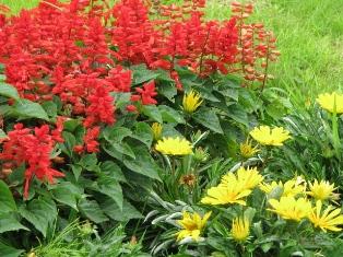 2008.07.06-花壇の花3