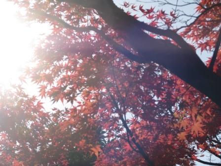 2008.11.30-紅葉1