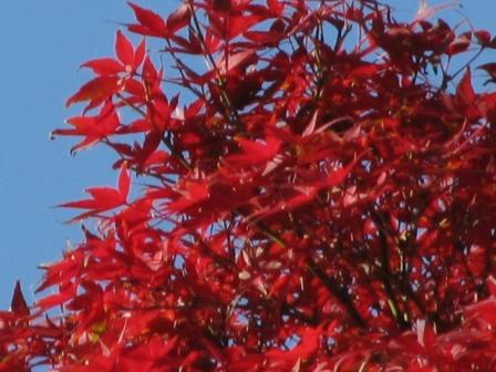 2008.11.30-紅葉2