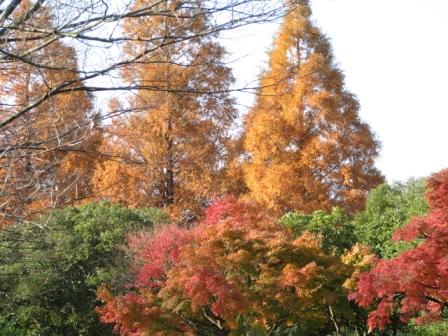 2008.11.30-紅葉3