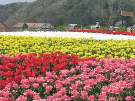 2009.04.12-チューリップ畑