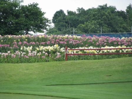 2008.07.11-パターゴルフ