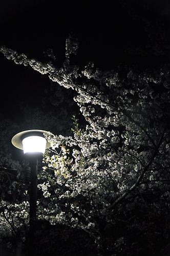 夙川の夜2