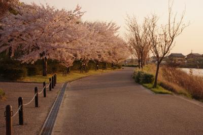 桜012009