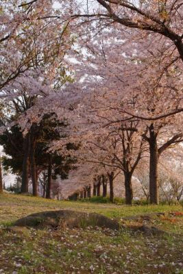 桜032009