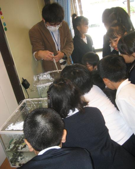 ホタルの幼虫の見学会
