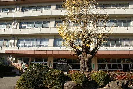 田上小学校と歴史の「銀杏」の木