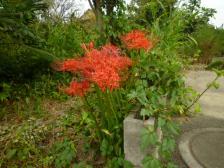 2009秋の花 001