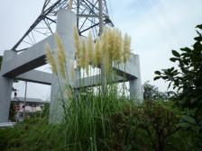 2009秋の花 004