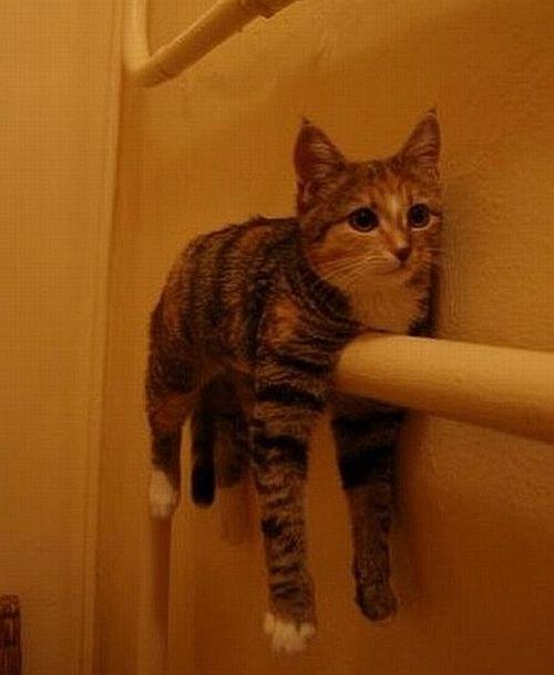 ひっかかり猫