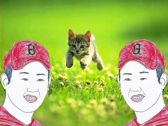 catsox.jpg