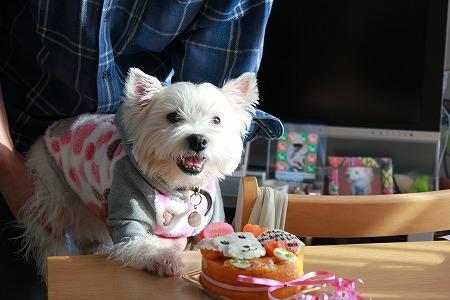 ルナちゃんとケーキ