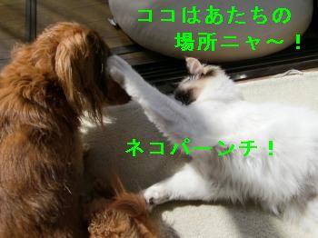 CIMG3710_convert_20090302131031_20090302133841.jpg