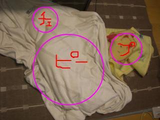 snap_takaramonopurin_2008114121950.jpg
