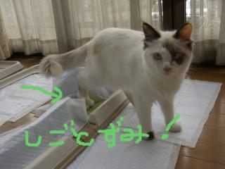 snap_takaramonopurin_2008126185231_20081213185450.jpg