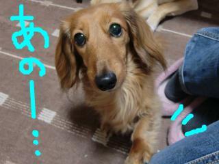 snap_takaramonopurin_20091514450.jpg