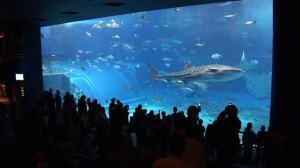 aquarium1-1-2.jpg