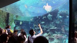 aquarium10-2.jpg