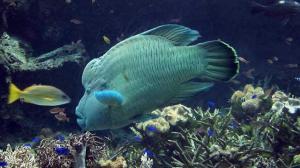 aquarium11-2.jpg