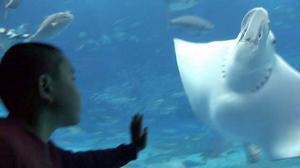 aquarium12-2.jpg